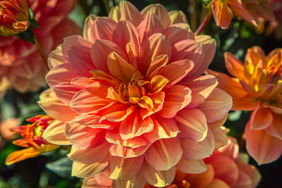 Camera Settings for Macro Flower Photography